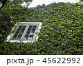 Ivy around brick house in local resort 45622992