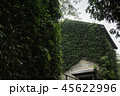 Ivy around brick house in local resort 45622996