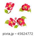 椿 花 植物のイラスト 45624772