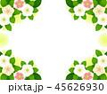 クリスマスローズ 花 寒芍薬のイラスト 45626930