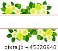 クリスマスローズ 花 寒芍薬のイラスト 45626940