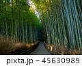 Arashiyama Bamboo groove in kyoto, japan 45630989