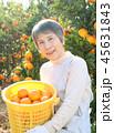 みかん収穫 シニア女性 帽子無し かご 45631843