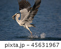 サギ 鷺 さぎの写真 45631967
