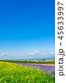北海道 花畑 晴れの写真 45633997