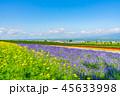北海道 花畑 晴れの写真 45633998