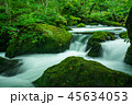 【青森県】奥入瀬渓流③ 45634053