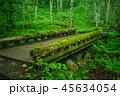 【青森県】奥入瀬渓流遊歩道の苔むした橋 45634054