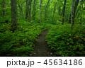 【青森県】奥入瀬渓流の遊歩道 45634186