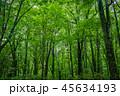 【青森県】白神山地のブナ林 45634193