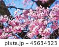 桜 春 花の写真 45634323