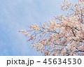 桜 春 晴れの写真 45634530
