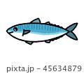 サバ 魚 白バックのイラスト 45634879