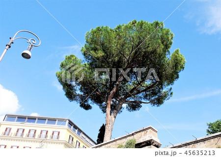 ローマ 地中海松 街並み 45635213