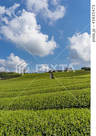 【静岡県】富士山と茶畑 45635473