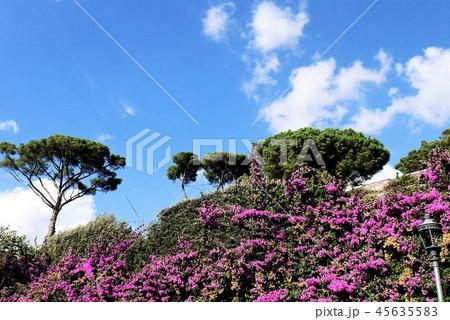 ローマ ボルゲーゼ公園 45635583