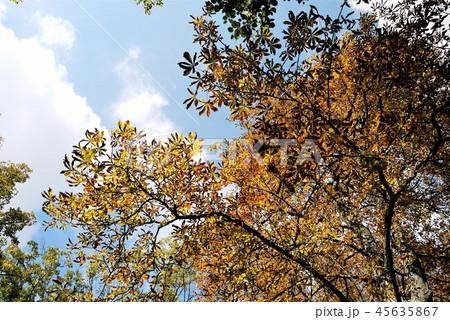 Reims ランス 黄葉 秋 45635867