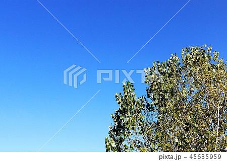 パリ 樹木 青空 45635959