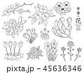 早春 花 春のイラスト 45636346