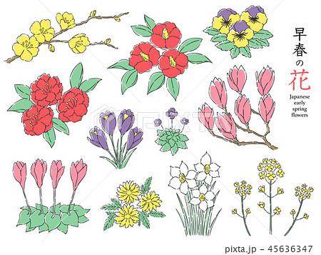 早春の花 45636347