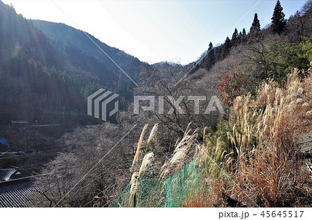 田舎の風景、山の集落と青空、岩、段々畑とススキ、群馬県南牧村 45645517