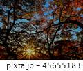 光芒と紅葉 45655183