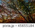 夕日に照らされる紅葉 45655184
