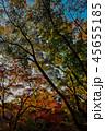 秋の風景 45655185