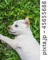 草 ホワイト 白の写真 45655688