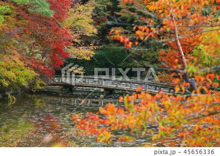 六甲山の美しい紅葉 45656336