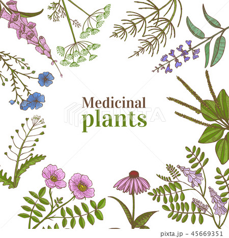 Square Template with Medicinal Plants in Hand-Drawn Style 45669351
