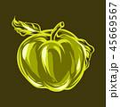 りんご アップル リンゴのイラスト 45669567