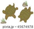 すっぽん 動物 鼈のイラスト 45674978