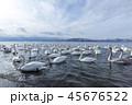 北海道 湖 白鳥の写真 45676522