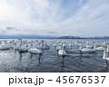 北海道 湖 白鳥の写真 45676537