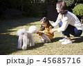 家族 ファミリー 犬 45685716