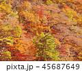 紅葉 秋 風景 背景 45687649