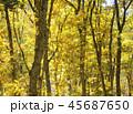 紅葉 秋 風景 背景 45687650