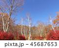 紅葉 秋 風景 背景 45687653