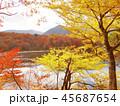 紅葉 秋 風景 背景 45687654