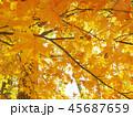 紅葉 秋 風景 背景 45687659