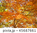 紅葉 秋 風景 背景 45687661