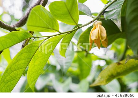 Ylang-ylang yellow smells fresh 45689060