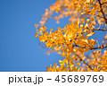 イチョウ 黄葉 青空の写真 45689769