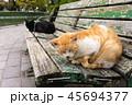 猫とベンチ 45694377