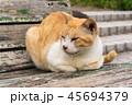 猫とベンチ 45694379