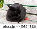 猫とベンチ 45694380