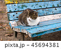 猫とベンチ 45694381