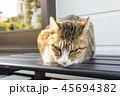 猫とベンチ 45694382