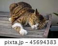 猫とベンチ 45694383
